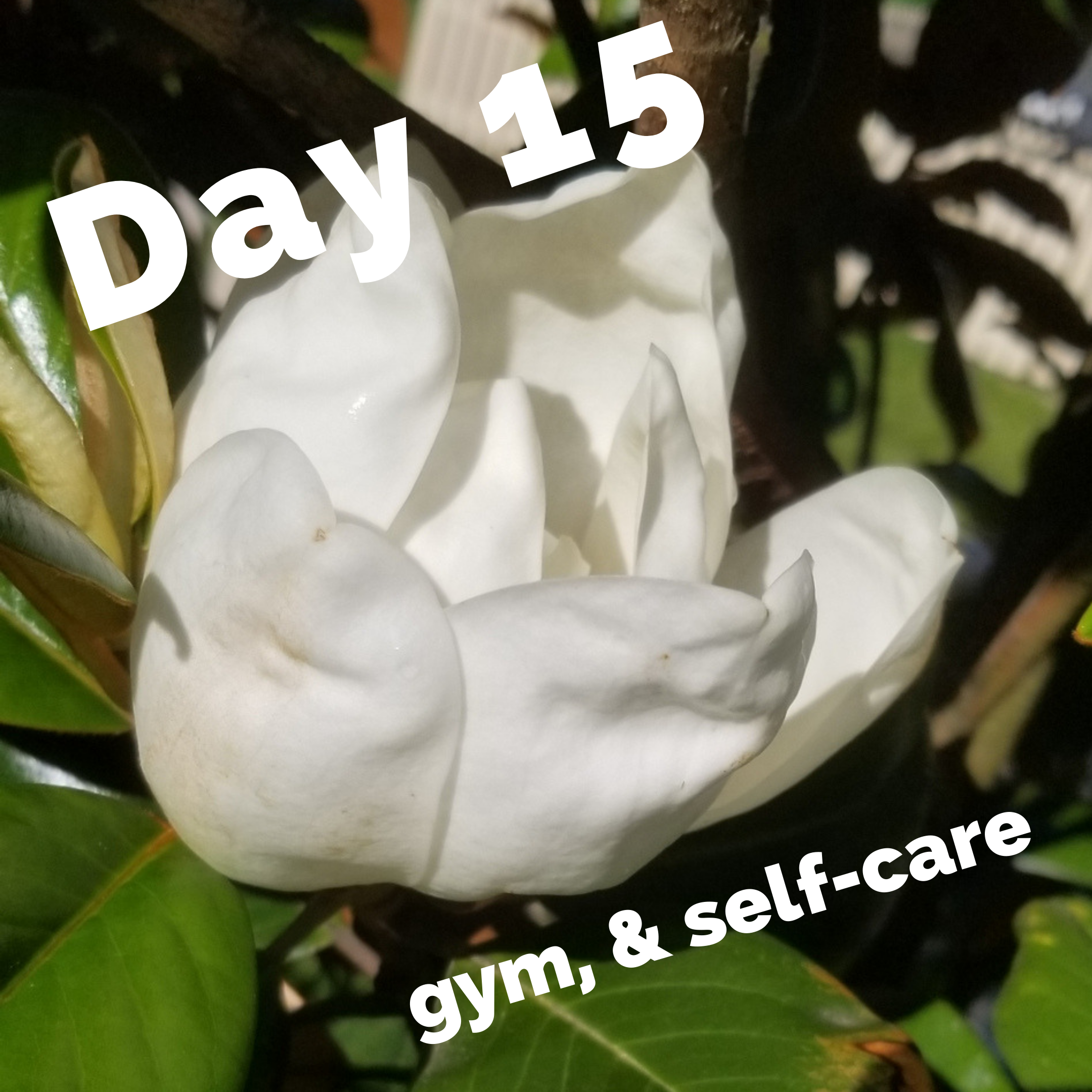 Day 15 – Exercise challenge: gym & self care